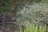 64-bb-casale-nardone